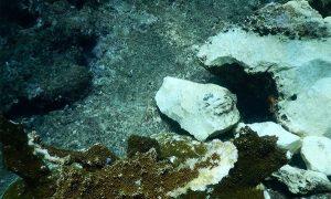 """Buque """"Antares"""" daña 9 especies de coral en Tuxpan: PROFEPA"""