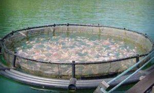 Fortalecen unidades de producción acuícola en Champotón: SEPESCA