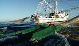 Asegura PROFEPA barco camaronero en actividades irregulares en Tamaulipas