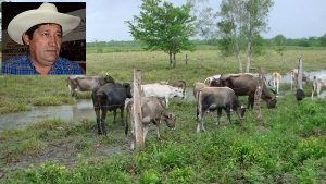 Ya no es negocio engorda de ganado en Campeche: UGR