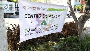 Dispondrá gobierno municipal de Benito Juárez 43 centros de acopio de árboles de navidad