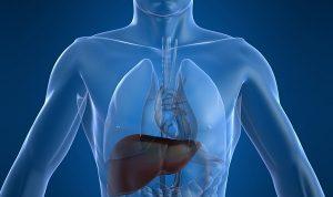 Consumo excesivo de alcohol puede desarrollar cirrosis hepática: Gastroenterólogo