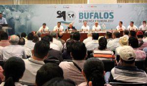 Apoya SAGARPA crianza de búfalos de agua por su alto valor nutritivo