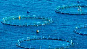 Incrementa tu productividad sustentablemente con acuacultura: SAGARPA