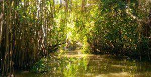 Impartirán charla Los Pantanos de Centla