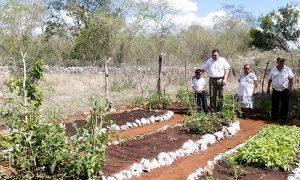 Programas sociales, con buenos resultados para familias yucatecas