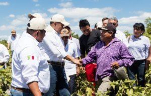 Peso a Peso dinamiza el campo de Yucatán