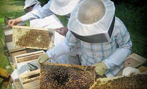 Acopiadas en Campeche más de 3 mil toneladas de miel