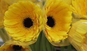 Floricultura, cultivando belleza y ganancias