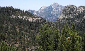 Parque Nacional Sierra de San Pedro Mártir, región con importantes reservas forestales de bosque