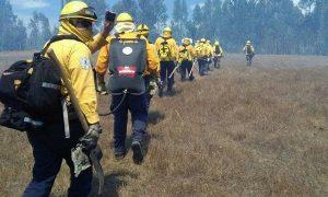 Grupo Intersecretarial de Apoyo para la Protección contra Incendios Forestales