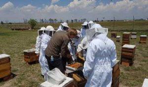 Productores mexicanos de miel alcanzan ventas por 27.3 millones de dólares a compradores europeos