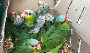 Policía Federal y PROFEPA aseguran 387 ejemplares de fauna silvestre en caseta de Chalco