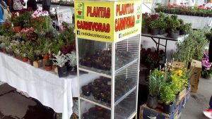 Plantas carnívoras en el último día de la Feria Consume Local «Flores de la Ciudad»
