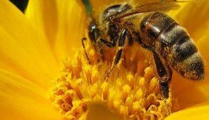 Día Internacional de las Abejas: insectos trabajadores y curiosos