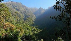 Reserva de la Biósfera Volcán Tacaná