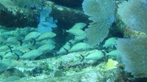 Arrecifes de coral, en peligro de sobrevivir ante el cambio climático