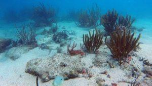 Aún no emiten decreto de zona arrecifal de Los Tuxtlas: Biólogo