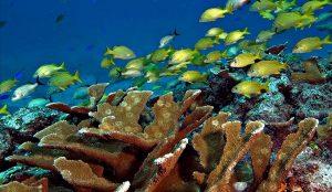 Salvemos los corales, cuidemos los océanos