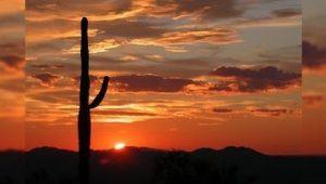 Los secretos del saguaro gigante del desierto
