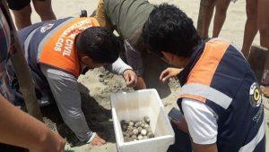 Desova tortuga en playas de Coatzacoalcos, Veracruz