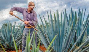 Se consolida Japón como el segundo destino internacional de tequila