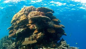 Cambio climático impacta arrecifes, peces y plancton