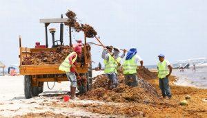 Barreras anti – sargazo en playas de Quintana Roo costarán 200 mdp