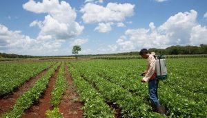 Extensionismo, pilar para el desarrollo de productores de Yucatán