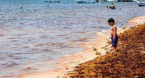 Acuerda Senado solicitar declaratoria de emergencia por sargazo en Quintana Roo