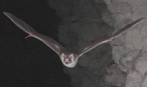 Los murciélagos no son como los pintan