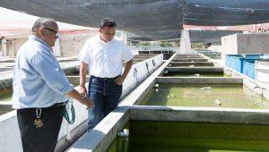 Peces de ornato, alternativa económica para productores yucatecos