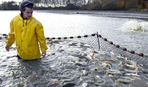 Sanidad en producción acuícola, garantía de seguridad alimentaria