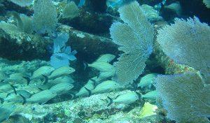 Ecosistemas marinos protegidos de México suman casi 70 millones de hectáreas