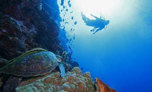 El tráfico ilegal de especies de vida silvestre marina