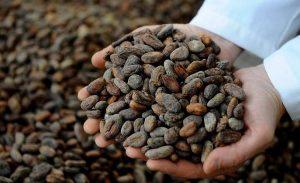 Los mil y un usos del cacao