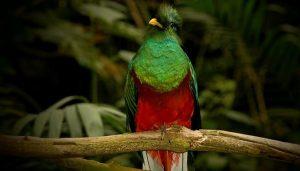 Quetzal, el ave más bella de América