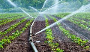 Riego tecnificado, un logro que empapa de éxito al sector agroalimentario