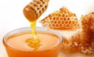 Esperan producción en Campeche de diez mil toneladas de miel
