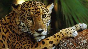 Exitosa protección de especies