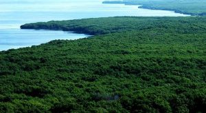 Un millón de hectáreas reforestadas