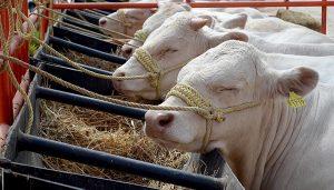 Plagas y enfermedades que afectan a la ganadería