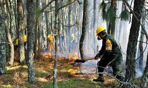 Se registran dos incendios en Maltrata y Acultizngo, en Veracruz