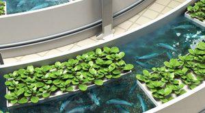 Acuaponía, un sistema sustentable que produce peces y plantas