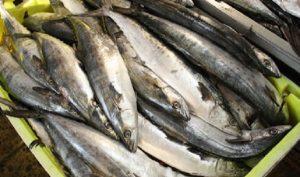 Amplia oferta de pescados y mariscos de producción nacional, a precios accesibles y frescos