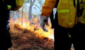 Gobierno de México coordina esfuerzos con gobiernos estatales y municipales para combatir incendios forestales