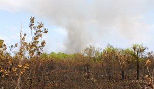Ya son 300 hectáreas de los Petenes siniestradas en Campeche