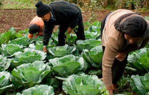 Actividades de los pequeños productores, una gran aportación a la humanidad