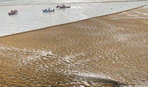 Gran mancha de sargazo llegará a Tulum y Xcalak
