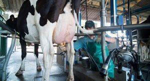 Las Buenas Prácticas en la producción de leche hacen la diferencia